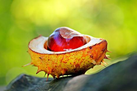 Temporada de castañas: 5 'delicatessen' con este fruto que no imaginarías